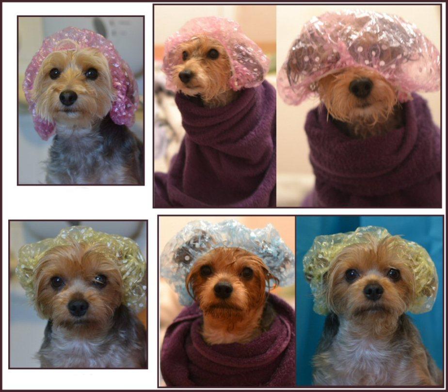 Pups Shower mednoname